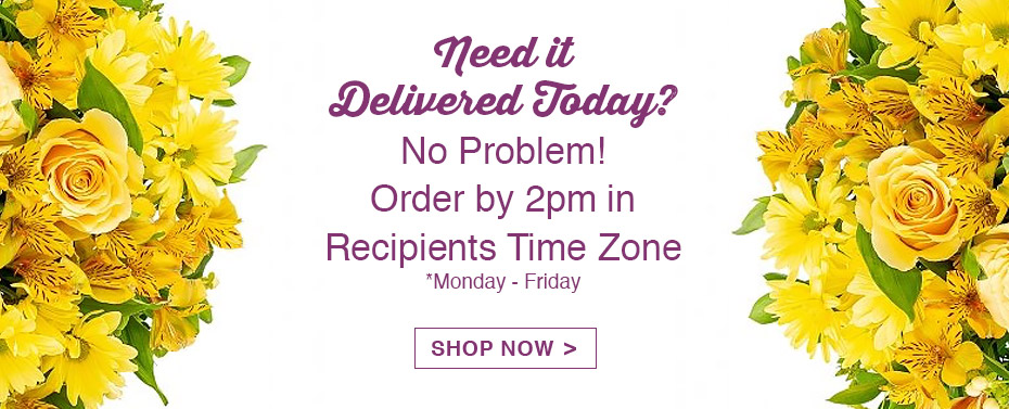 Same Day Delivery? Order By 2pm.